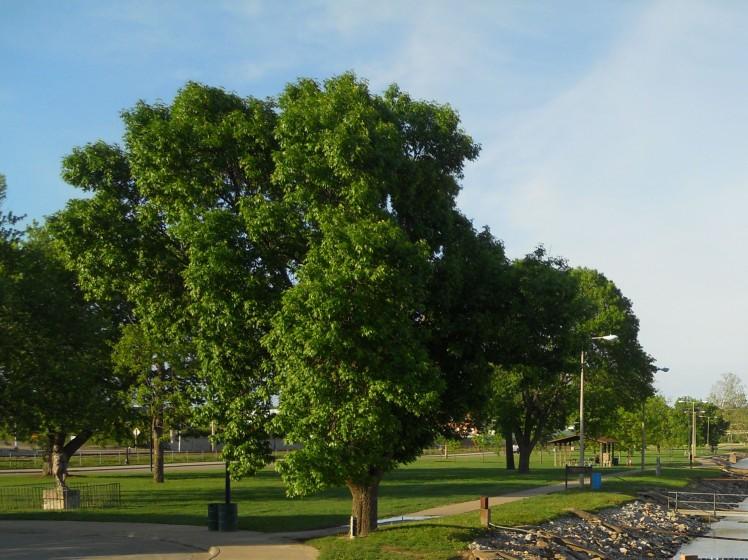 Trees near Marina